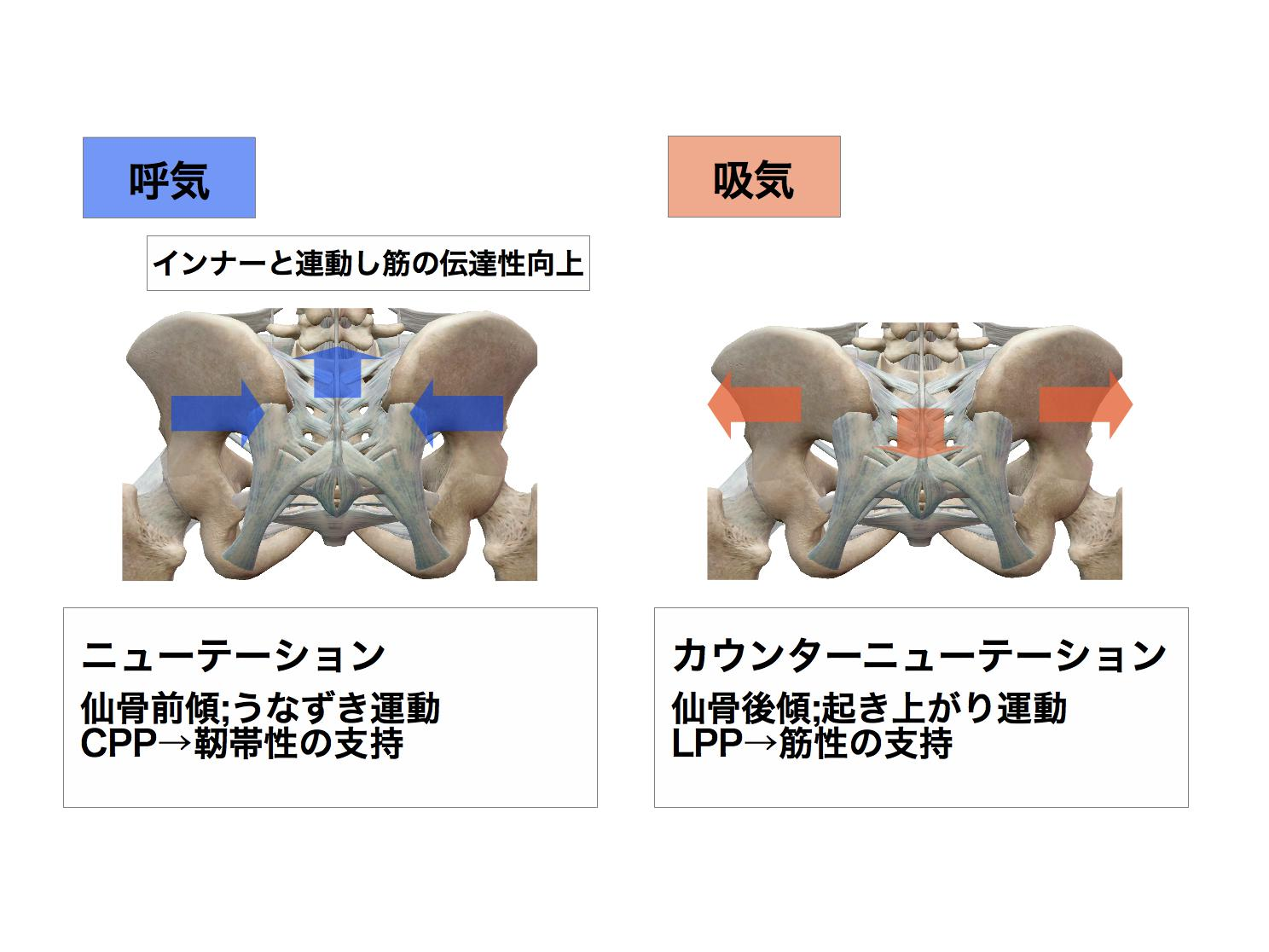 骨盤と連鎖