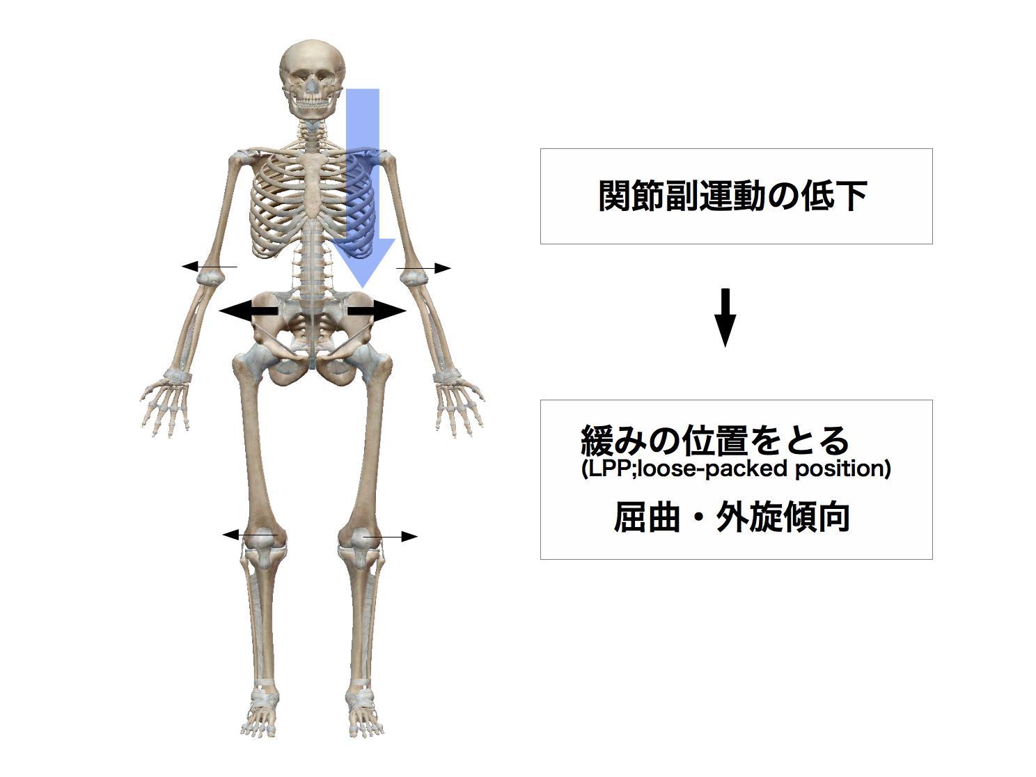 姿勢と関節の位置