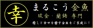 【まるこう金魚】へ