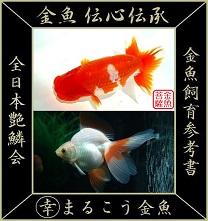 金魚 伝心伝承 SITE-LOGO