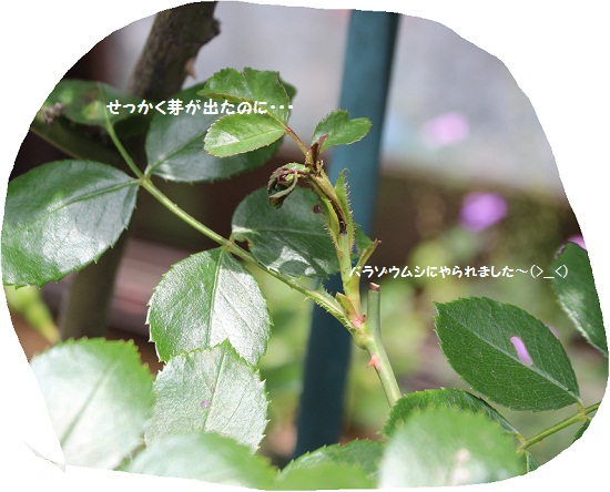 011-2_201405191326036f8.jpg