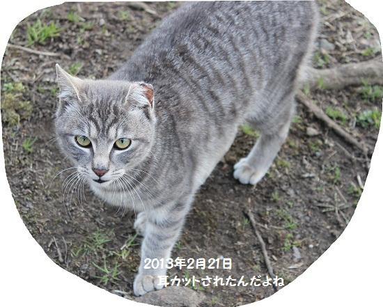 去年のネコちゃん