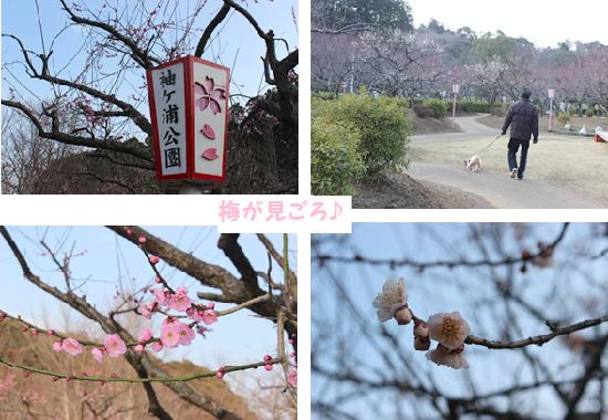 梅が満開♪