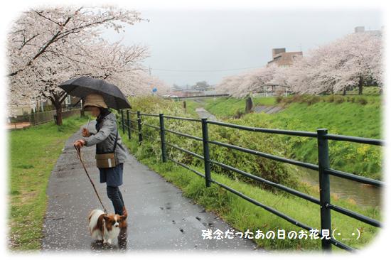 雨がさぁ!(泣)