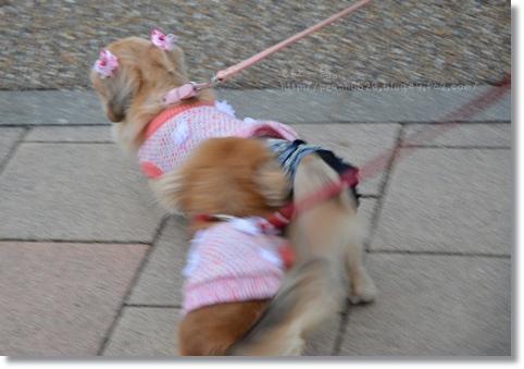 春散歩201303 107
