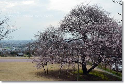 桜 039