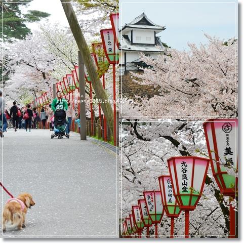 金沢城と桜2014 3-1