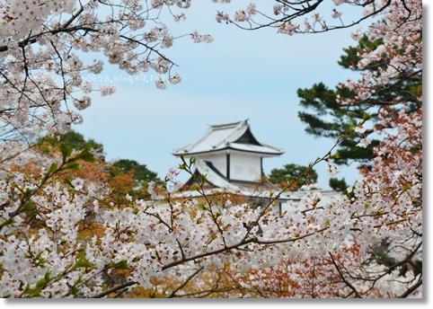 金沢城と桜2014 005