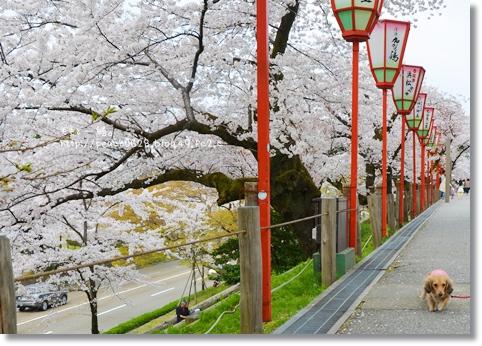 金沢城と桜2014 079
