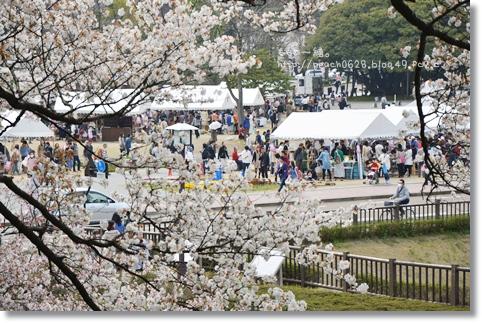 金沢城と桜2014 103