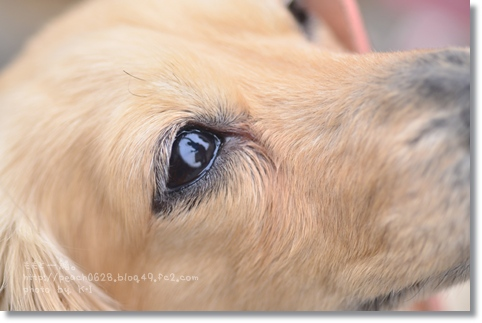 0419-1 into the eye
