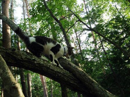きら木登り