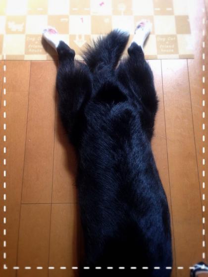 IMG_2257_Fotorぱ10