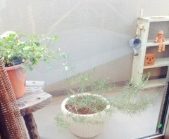 berandagarden20141.jpg