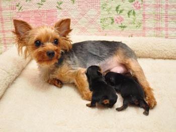 みかんちゃん出産