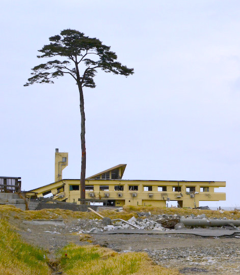 Collapsed_Rikuzentakata_Youth_Hostel_and_a_Pine_Tree_of_Hope[1]