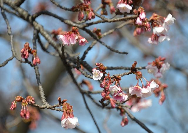 春の訪れ 4