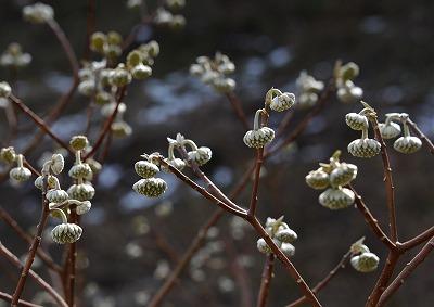 春の花 8