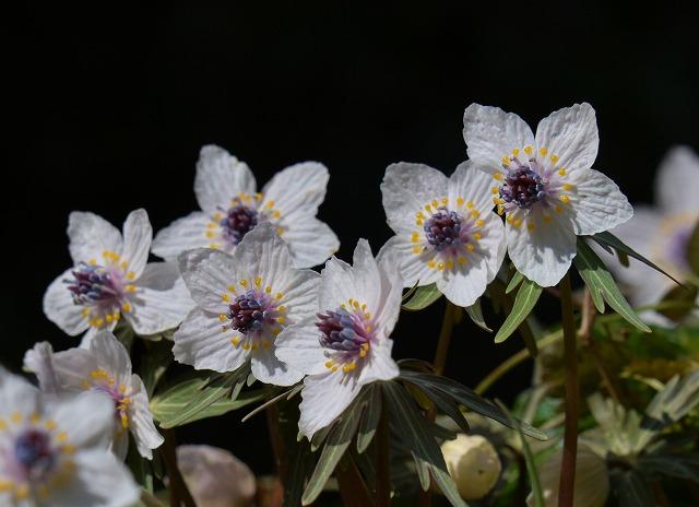 春の花 16