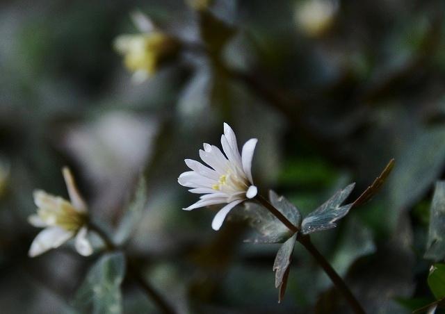 春の花 7