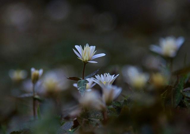 春の花 6