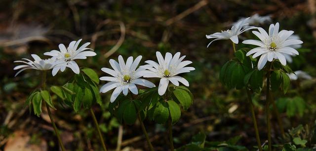 県北の春 1