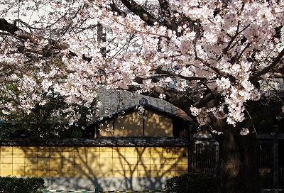 広島市の桜3
