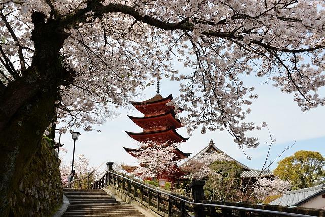 桜の宴 6