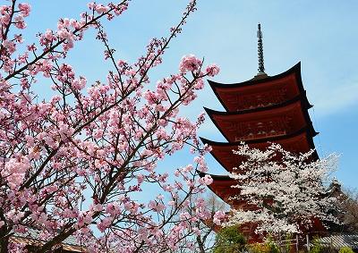 桜の宴 8