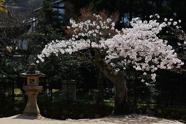 桜の宴 9
