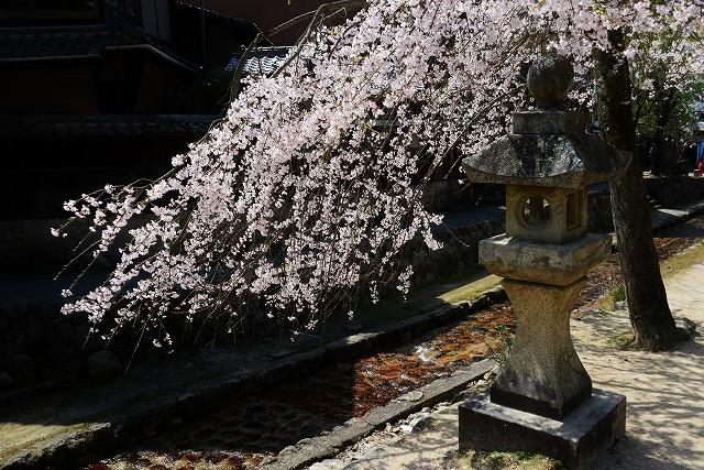 桜の宴 10