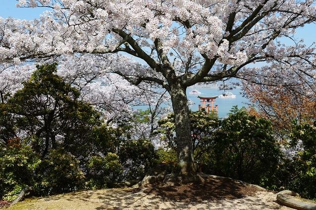桜の宴 11
