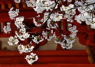 桜の宴12