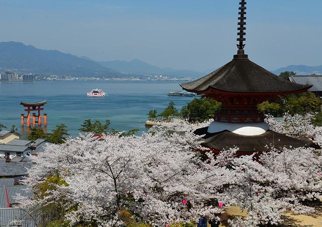 桜の宴16