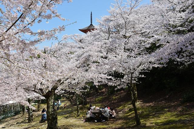 桜の宴14