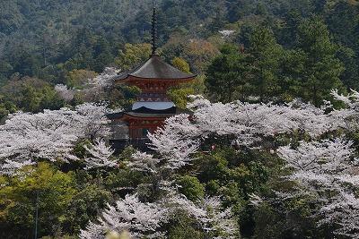 桜の宴17
