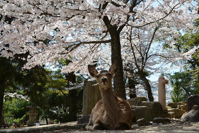 桜の宴18