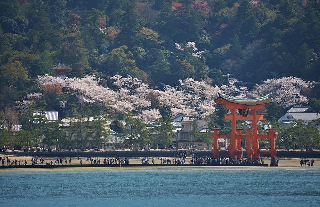 桜の宴21