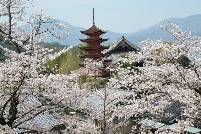 桜の宴 7