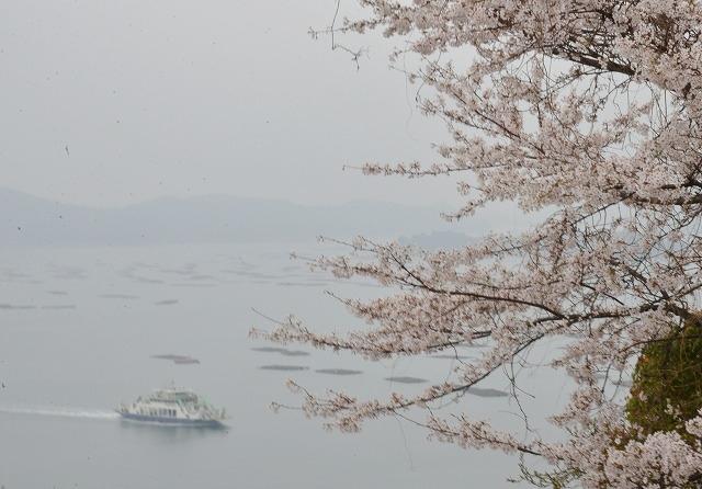 桜雨情 5