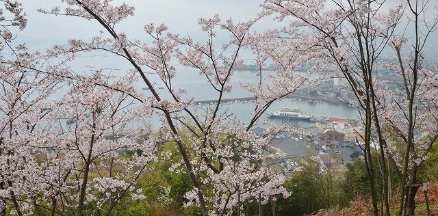 桜雨情 9