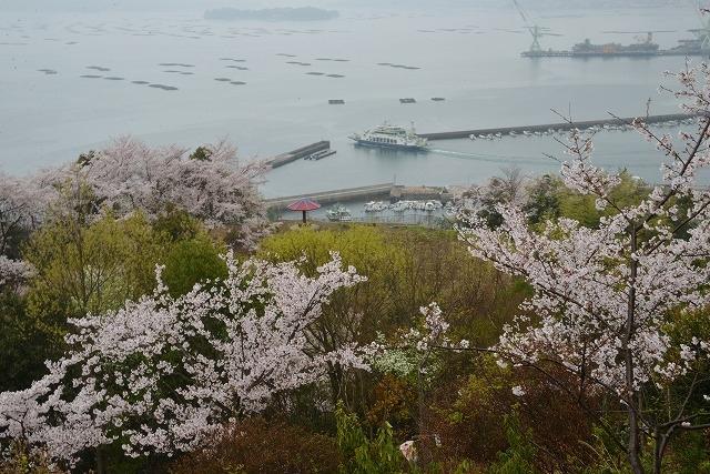 桜雨情 10