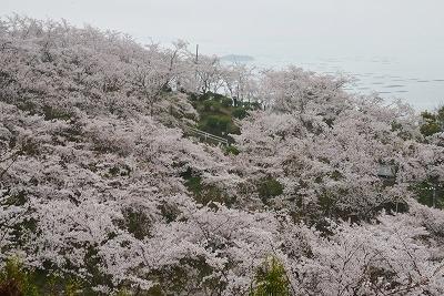 桜雨情 12