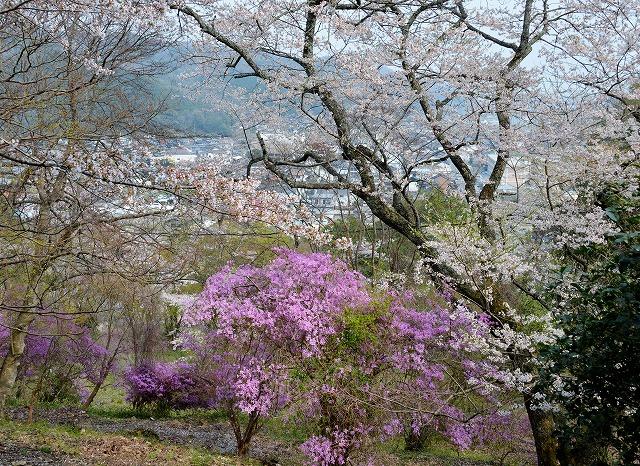 三次・桜2