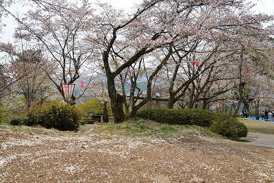 三次・桜 8