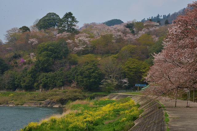 三次・桜13