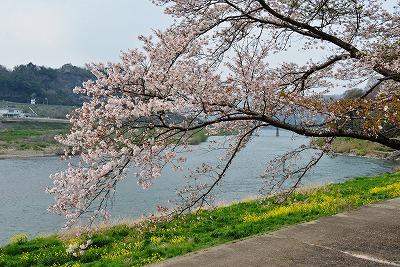 三次・桜 15