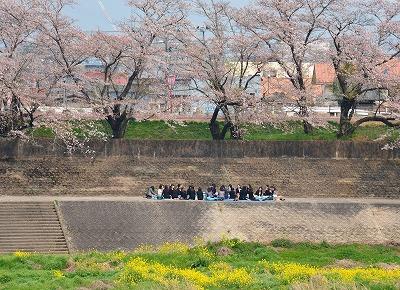 三次・桜 17
