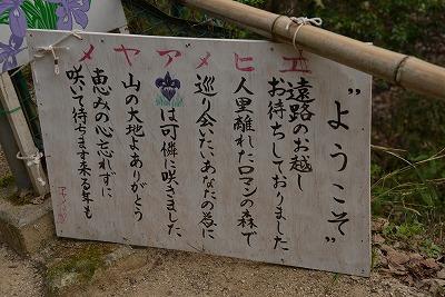 エヒメアヤメ10