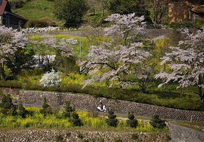 棚田の春7